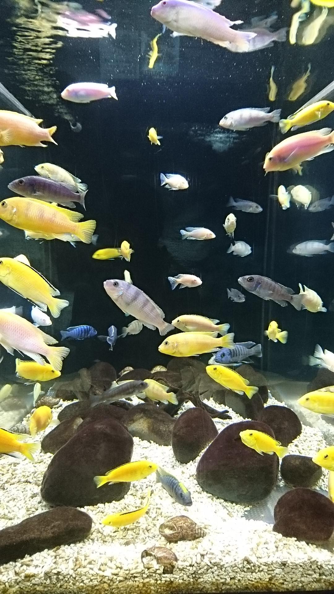 色とりどりの小魚
